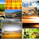 wine tourisme